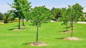 Пользователям лесных участков предстоит высаживать срубленные деревья